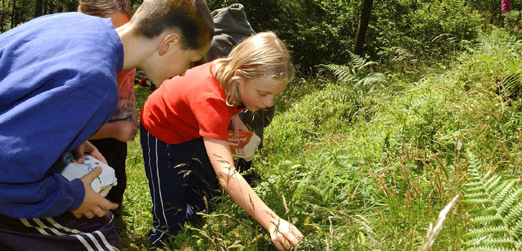 Children looking for insects in the Lake District copyright Charlie Hedley