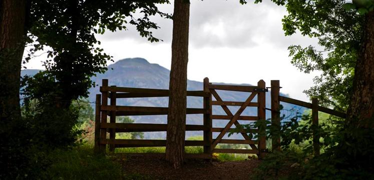 Gate and trees along path near Portinscale copyright Charlie Hedley