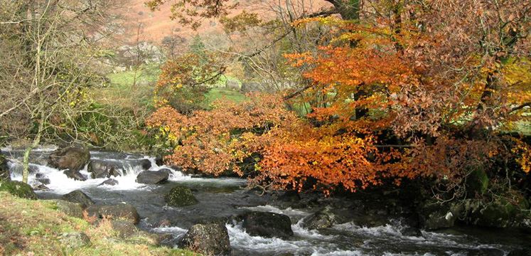 Easedale Beck and autumn leaves copyright Helen Reynolds