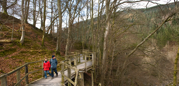 Walkers on boardwalk through woods below Latrigg copyright Charlie Hedley