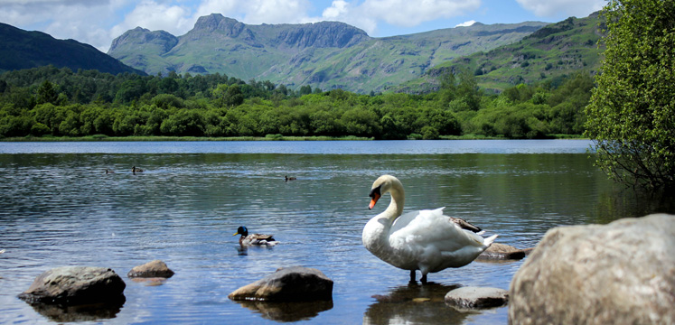 Elterwater and Swan 747x360