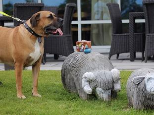 A dog enjoying the lodge