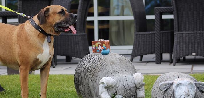 A dog enjoying the lodge outside