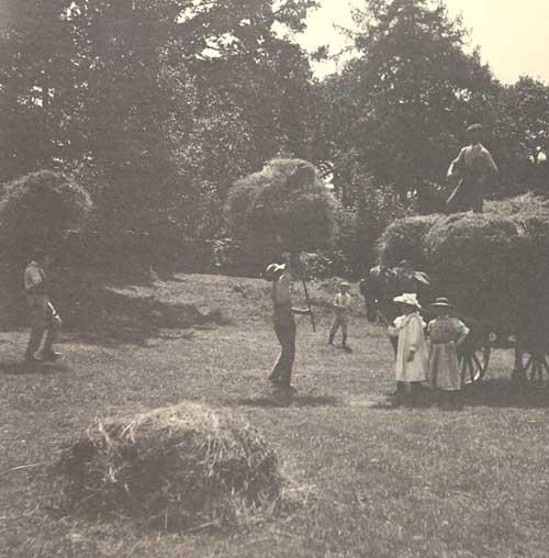 Harvesting hay at Brockhole