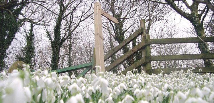Snowdrops and footpath sign near Loweswater copyright Michael Turner