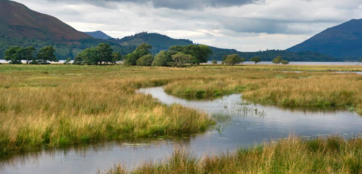 Reed beds of the River Derwent copyright Charlie Hedley