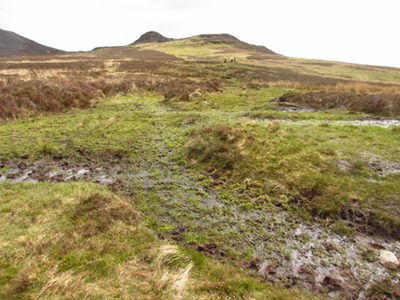Boggy Bleaberry Fell
