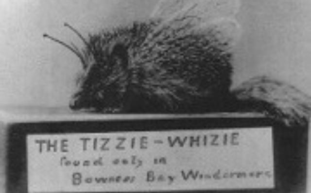 Tizzie Whizie