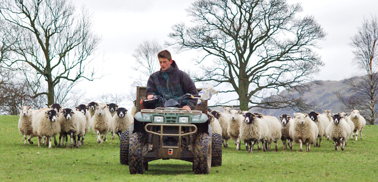 Farmer on a quad bike with sheep copyright Charlie Hedley
