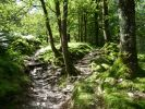 Woods near Langdale © Andrea Hills <a href='https://www.broads-authority.gov.uk/news/old-news/sealed-bid-auctions-of-four-vessels/Clair-De-Lune-thumbnail.jpg'>Large image</a>