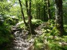 Woods near Langdale © Andrea Hills.