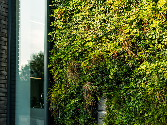 A vertical wall covered in plants.