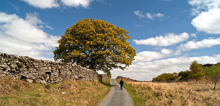 Tree in Torver copyright Nick Thorne Bodian Photography