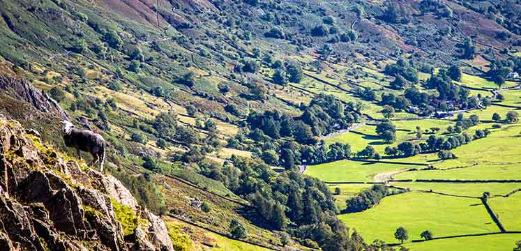 Langdale - copyright Andrew Locking