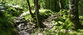 Woods near Langdale