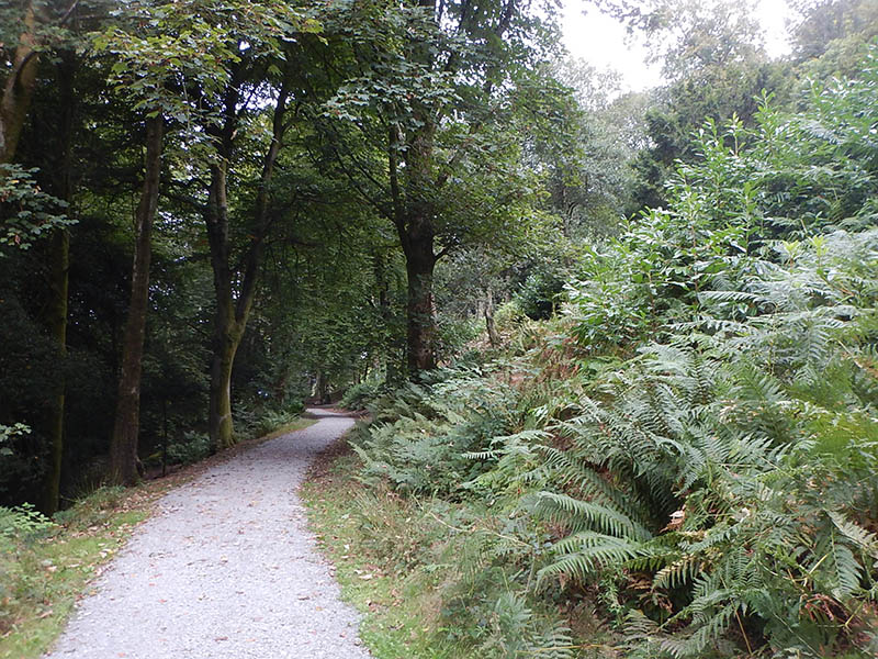 Tall trees on either side of the path.
