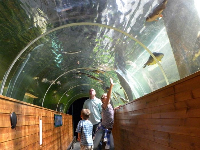 Family looking up at fish in a glass tunnel