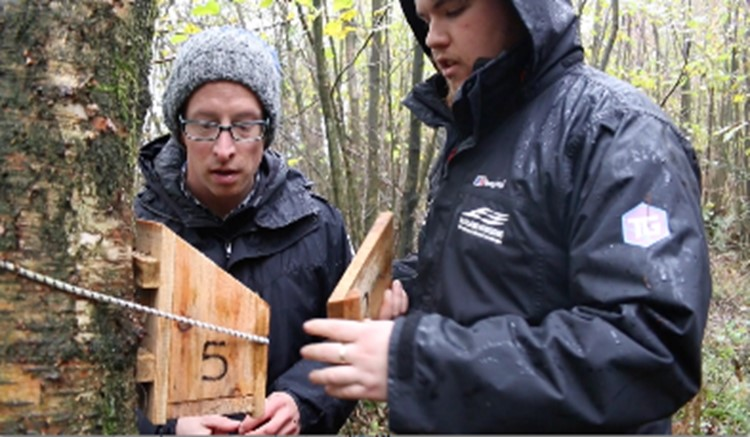 Ranger and apprentice checking dormice boxes
