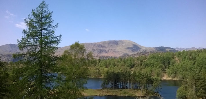 View from Tarn Hows