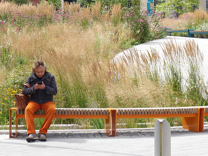Man sat on a bench with tall grasses and meadow plants behind.