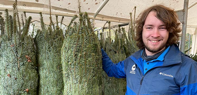 Staff member with netted christmas trees
