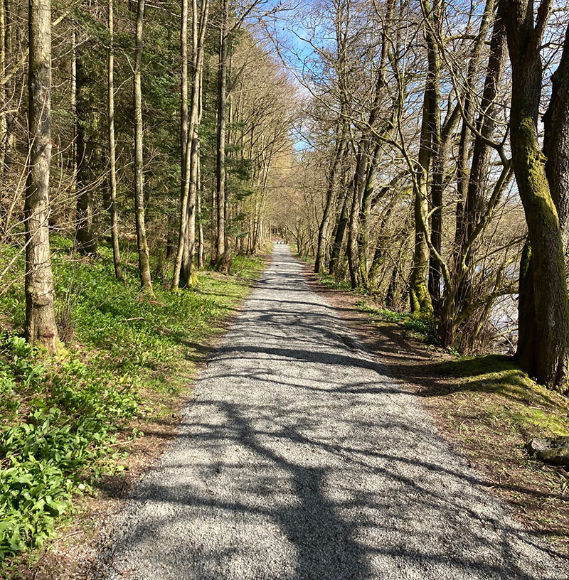 Wide gravel path amongst tall trees.