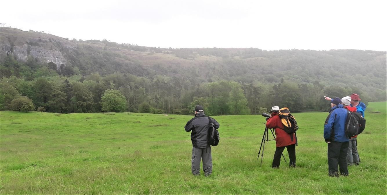 Volunteers use a high powered telescope to note where the birds are nesting