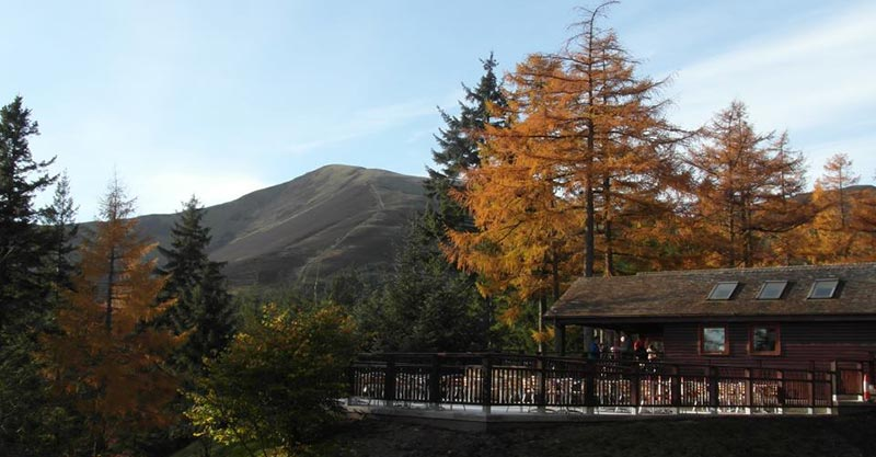 Cafe over looking forest at Whinlatter