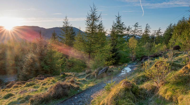 View along a forest track in Grizedale forest