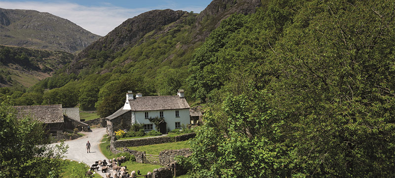 A white washed farm with sheep in a wooden valley with high fells behind