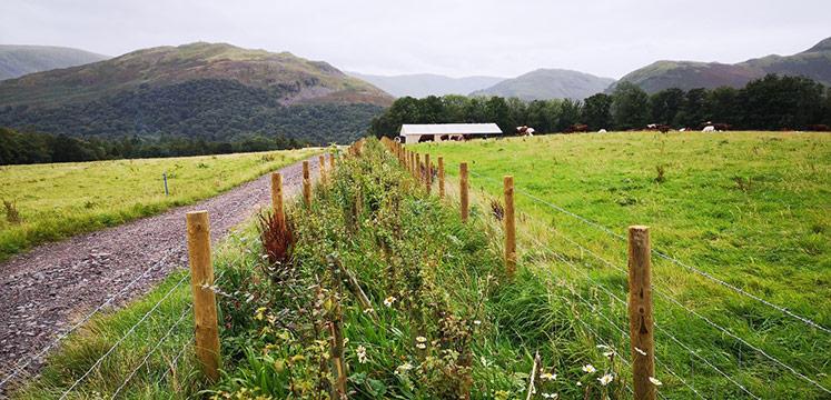 A meadow strip along a field.