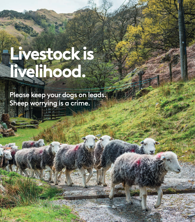 Livestock is livelihood. Please keep your dogs on leads. Sheep worrying is a crime.